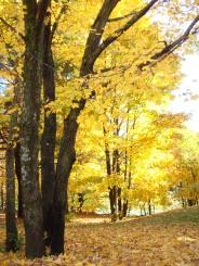 Travel Theme - Foliage
