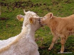 Mamma & Baby Couple