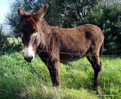 Soft donkeys in Sardinia