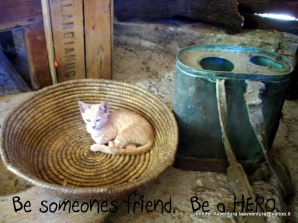 Soft little kitties spreading messages of hope.