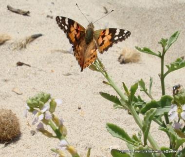 Soft flutterbyes fly on by.