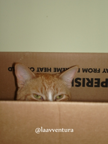 Soft cat hats hide in the box.