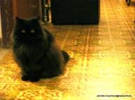 Soft cool black cat