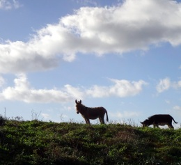 December in Sardinia