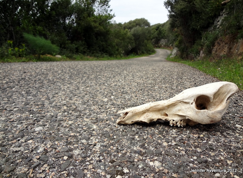 A skull on my hiking path