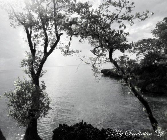 Tilted by Jennifer Avventura My Sardinian Life 2013 (2)