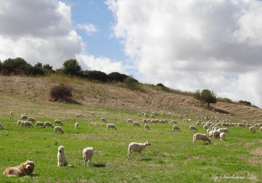 Inside Sardinia by Jennifer Avventura My Sardinian Life