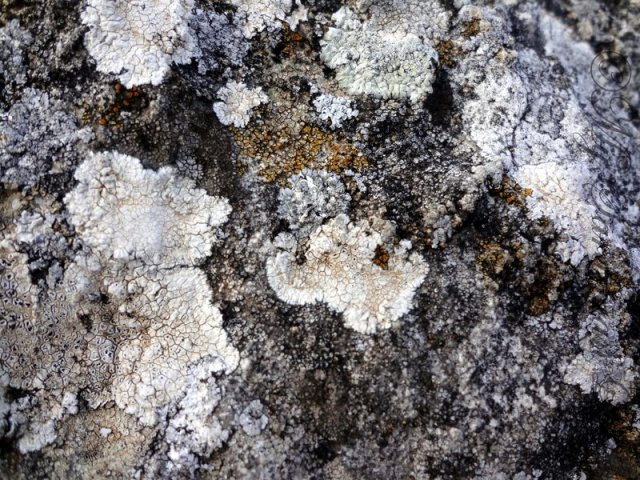 Petrified Forest of Carrucana Sardinia by Jennifer Avventura My Sardinian Life