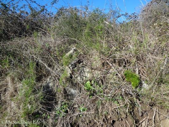 Asparagus by Jennifer Avventura My Sardinian Life 2014