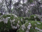 Inside Sardinia: Enchanting Forests