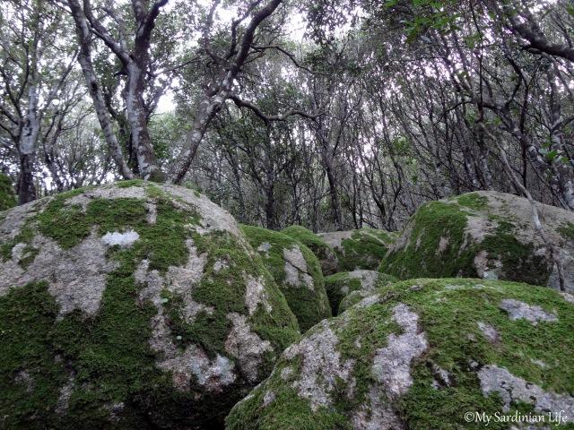 Jennifer Avventura 2014 My Sardinian Life