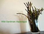 Asparagus caught inSardinia