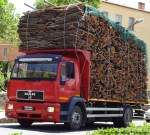 Inside Sardinia: Cork from theGallura
