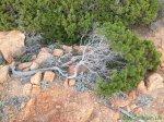 Inside Sardinia: A Distorted Nature'sPoem