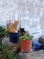 Cats of Sardinia: Ciao Bello